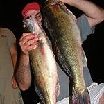 fiskfangst