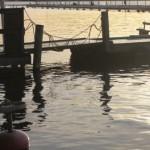 hamnen120107_1
