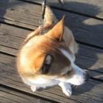 hundhamnkapten-fraan-ovan